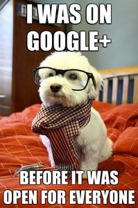 chien_google_plus.PNG