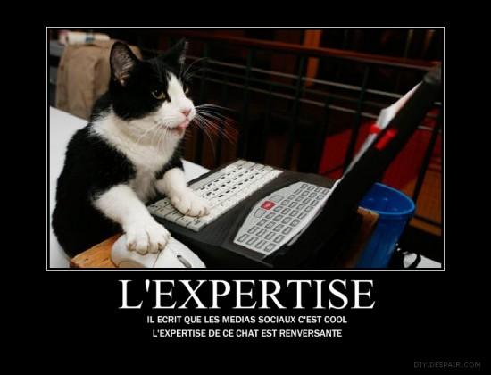Expert Cat