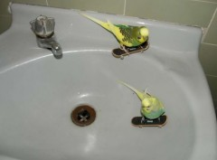 Animals on Skate Boards