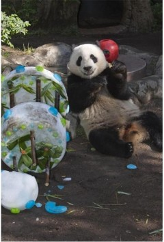 Panda loves to party