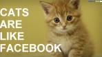 arelikefacebook