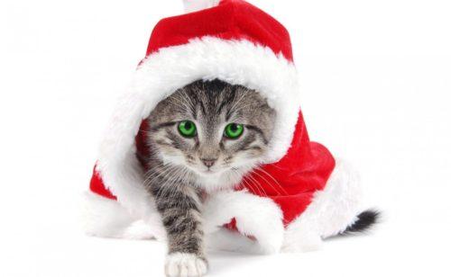 Fonds d'écran Noël  sélection