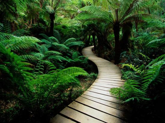 Fonds D Ecran La Selection Nature Et Paysages Paradisiaques Bdm