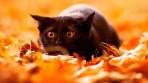 fond-ecran-automne