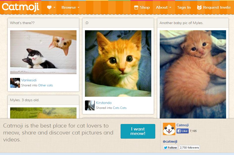 site de rencontre pour animaux chat
