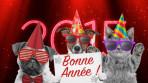 bonne-annee-2015-chats-chiens