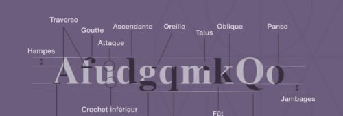 Infographie   l'anatomie lettres typographie