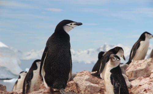 Google déploie Penguin 4.0   l'algorithme est désormais mis jour temps réel