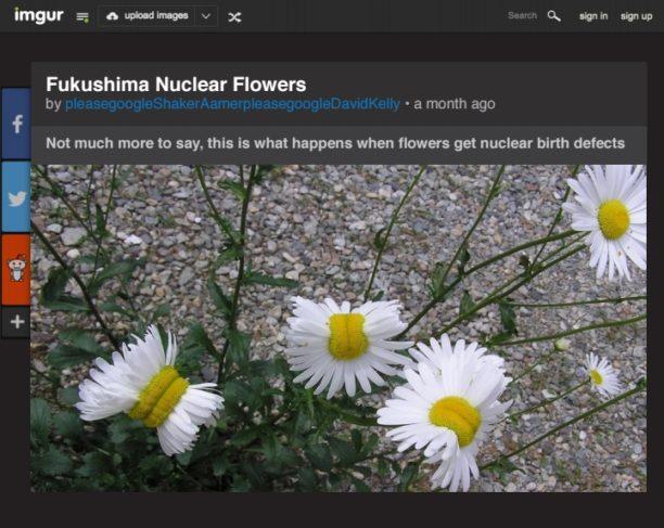 fukushima-flowers-fake-news
